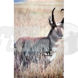Diana Antelope
